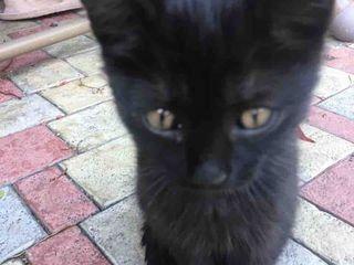 Подарю черных котят! 3 мальчика и одна девочка!!!