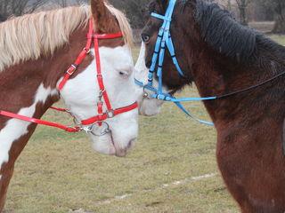 PIimbare [pe cai  in doi.