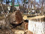 Tăierea copacilor Autoturn,Вышка пили дерева .Taerea copacilor  cu visca si fara.(Autoturn 29m 22м )