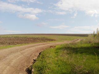 Vînzate teren agricol, sat. Colonița 200 ari