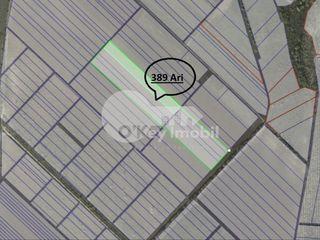Teren agricol 389 ari, Cojușna, traseul național Chișinău- Ungheni 35000 €