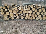 ISIS ,,Hincesti Silva,, are spre realizar lemne.