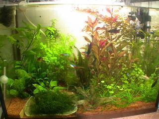 растения и рыбки недорого