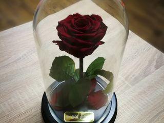 Роза не вянет 5 лет – удивит любую женщину! Жми!