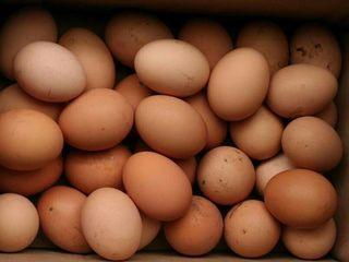 Продаются натуральные домашние куриные яйца! Телицентер