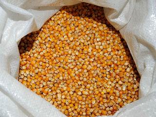 Продам Кукурузу 2 тонны в мешках