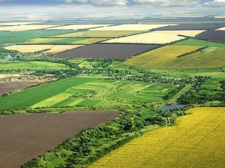 Cumpar 20 ha de teren agricol in Costesti sau Soticeni, Ialoveni