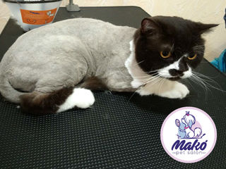 Стрижка кошек в салоне Mako!