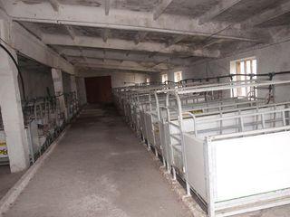 Продается животноводческая ферма.