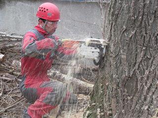 Арбористика спил деревьев, обрезка веток, кронирование
