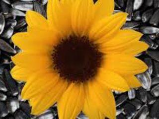 Cumpar floarea soarelui