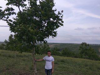 Ореховая пенсия для граждан Молдовы