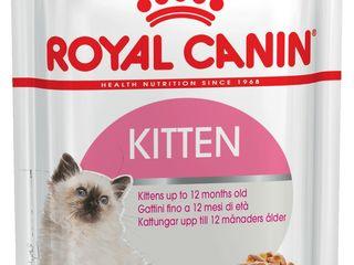 """"""" Kitten """" Royal Canin """" с доставкой по Кишиневу !!!"""