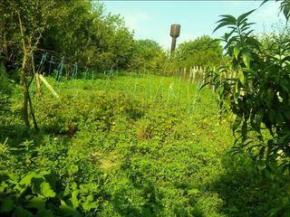 Vând lot de pământ, 12 ari, fântână în ogradă și casa trebuie demolată.