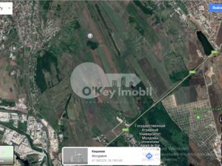 Teren agricol, 35 ari, s. Ghidighici, 4500 € !
