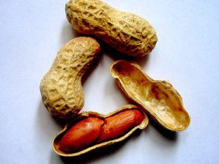 Cumpărați semințe de alune de pamant (arahide)
