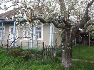 Продаётся дом на 26 сотках + сарай в Чоропканах
