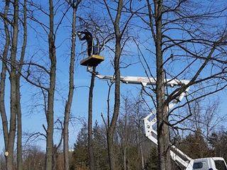 Tăierea copacilor înclinați sau deteriorați- cu masini si echipamente speciale .Calitatea garantată