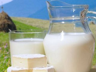Brinza,cas si lapte de capra de rasa gustoasa si fara miros ( br.70 l/ lapte20 l Raciula )
