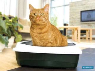 Наполнители для кошек с бесплатной доставкой Кишинев !!!