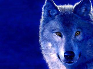 """Брюнетка,, взгляд волчицы"""" сердце львицы"""" стройная 100%"""