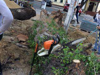 Eliminarea de urgenta, a copacilor uscati si avariati