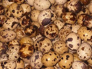 oua de prepeliță in Falesti