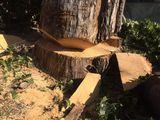 Taierea copaci uscati , taierea crengilor , pomi periculosi si inalti