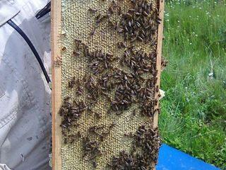 Продам майский (акациевый) мёд.