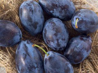 Cumpar prune in cantitati mari / покупаю сливы в больших количествах