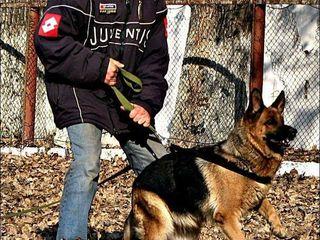 Профессиональная дрессировка собак любых пород ОКД (общий курс дрессировки)