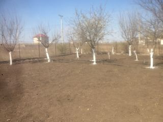 Срочно, продается земельный участок в селе Пашканы 10 сот (10 км от Кишинева в сторону Оргеева)