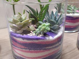 Композиции живых цветов суккуленты и кактусы в стеклянных вазах
