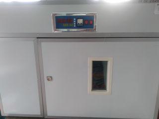 incubator automat 528 oua
