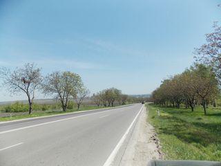 Traseul Chișinău - Hîncești, prima linie, 106 ari