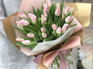 Свежие тюльпаны ! Lalele cu livrare i 3 ore!