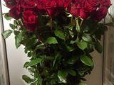Trandafiri super pret  ,direct de la crescatori . pret unic