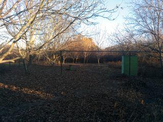 Сад и пол дома
