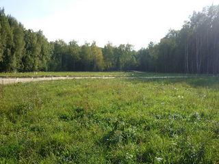 lot 7.5 ari sub constructi./ участок в думбраве  выход в лес