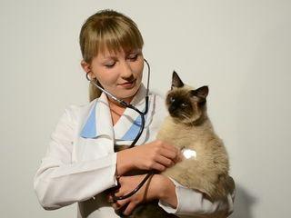 Medic veterinar la domiciliu 24/24