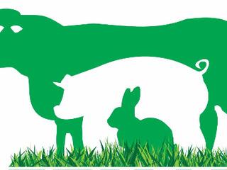 Materiale pentru zootehnie, porci, vaci, oi, iepuri, găini, însămânțare
