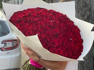 101 Trandafiri 790 Lei