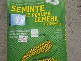 Продам семнна кукурузы р-459