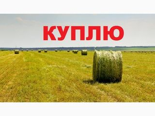cumparam agricol consolidat linga chisinau 5 ga / купим агро землю возле кишинёва 5 га