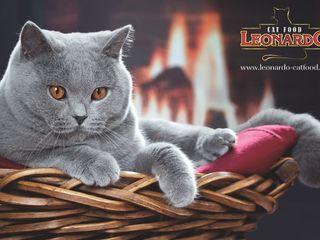 """Корм """" Leonardo """" для кошек - c доставкой по Кишиневу."""