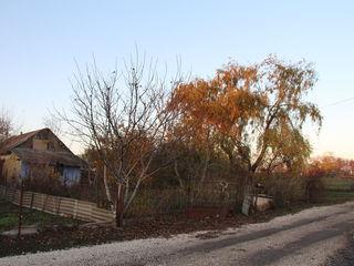 Vând sarai în satul Miciurin cu teren - 27 ari (sotci)