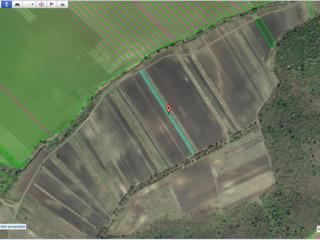 Vind 13 ar teren agricol, s.Costesti, r.Ialoveni, plantati cu nuci