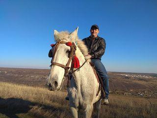 Cu mic, cu mare, haideti cu caii!