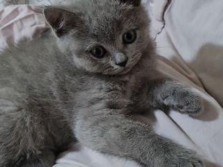 Vind pisici