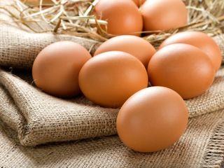 Продажа Яйца напрямую от производителя по оптовым ценам!